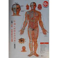 标准人体针灸穴位图(一套四张)附赠耳部.足部反射区穴位图 于丽芳绘 9787537741361