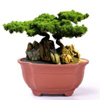 紫砂花盆陶瓷创意古典室内中国风吊兰绿萝盆菖蒲盆景小榕树盆