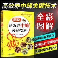 高效养中蜂关键技术土蜜蜂养殖技术书籍中蜂高效养殖技术大全实用养蜂技术养中华蜂大全书籍养蜂书科学饲养蜜蜂病害防治技术一本