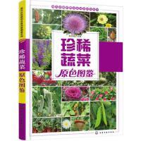 正版 珍稀蔬菜原色图鉴 现代珍稀植物及食用菌图鉴系列 本书以全彩的形式 精心收集和整理了400余幅高清彩色图片蔬菜认知