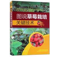 图说草莓栽培关键技术 草莓种植技术书籍 草莓育苗技术与周年栽培管理技术 草莓病虫害防治 农业水果种植技术书籍