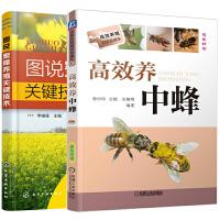 图说蜜蜂养殖关键技术+高效养中蜂 2册 中蜂蜜蜂养殖技术书籍 蜜蜂良种繁殖书籍 蜂病防治书 中蜂蜜蜂饲养新技术 养蜂技