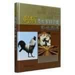 正版 鸡病类症鉴别诊断彩色图谱 本书是禽病工作者 大专院校师生食品卫生检疫人员以及养禽场 饲料公技术人员等工具书
