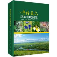呼伦贝尔草原植物图鉴