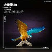 飞禽鸟类老鹰鹦鹉�^全新散货仿真动物模型套装玩具
