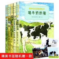 黑鹤亲近大自然动物小说全5册 喝牛奶的猪/乌尔逊河边的狼/母兔/呼和诺尔野猫 三四五六年级小学生课外书儿童文学动物小说