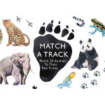 Match a Track: Match 25 Animals to Their Paw Prints (Magma