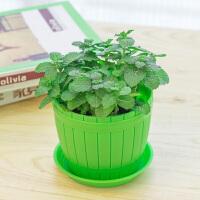 可食用薄荷盆栽室内绿植花卉办公室桌面小盆栽四季植物套装