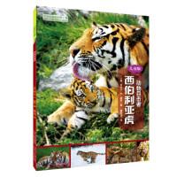 动物目击者:西伯利亚虎(儿童版) [美] 丽贝卡・E.赫希,曹文浩 河北少年儿童出版社 9787537695619