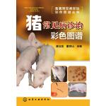 畜禽常见病诊治彩色图谱丛书--猪常见病诊治彩色图谱