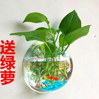 水培花卉仿真绿植园艺多肉植物水养绿萝盆栽工艺品亚克力墙贴花瓶抖音 含盆