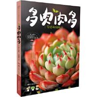 多肉肉多(手绘升级版)(汉竹) 王意成 江苏科学技术出版社 9787553756424