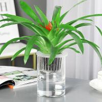 水培植物玻璃瓶绿萝盆栽室内花卉小红星水养常春藤四季花