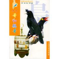 【包邮】八哥和鹩哥 王增年 ,莫玉忠 王增年著 中国农业出版社 9787109061088