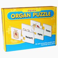小乖蛋人体拼图早教益智玩具智力拼图 学习英语拼单词配对0201