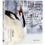 与鹤共舞:丹顶鹤的隐秘世界