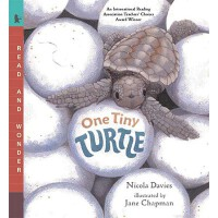 【预订】One Tiny Turtle