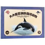 动物大百科·大小能目测的海洋动物