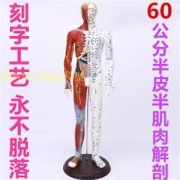 清人体针灸穴位模型经络 铜人刻字中医教学人体模型男女小人