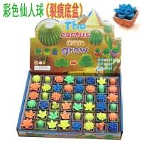 仙人掌泡水膨胀植物会长大的仙人球仿真新奇小玩具一盒48个 均码