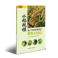 水稻规模生产与病虫害防治原色生态图谱
