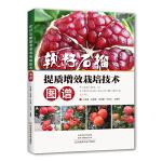 软籽石榴提质增效栽培技术图谱