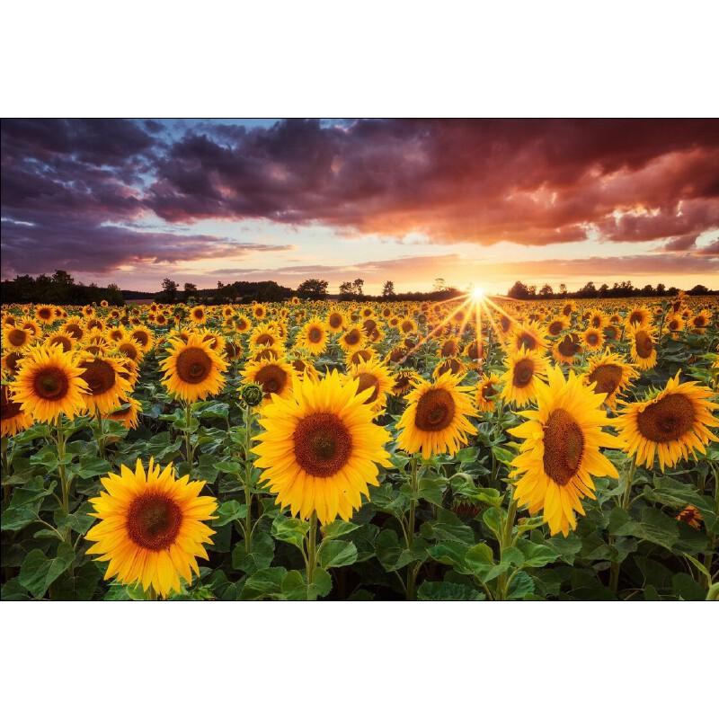 成人1000片木质拼图1500智力玩具装饰画风景唯美向日葵