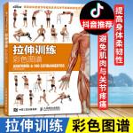 拉伸训练彩色图谱 肌肉拉伸健美肌肉训练书 女无器械运动健身教程大全 男练肌肉体育书 精准拉伸 运动健身书