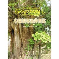 中国银杏品种图鉴