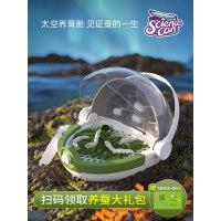 蚕宝宝小学生养蚕套装蚕卵饲养箱昆虫观察盒科学实验儿童户外玩具
