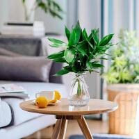 水培植物室内花卉盆栽办公室水养绿植园艺节节高转运观音竹