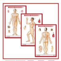 A人体经络穴位挂图 (正、侧、背) 男性 3张/套 中医针灸穴位标准挂图 男女美容养生保健中医挂图 赠图解手册