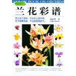 【正版书籍】兰花彩谱 汕头大学出版社